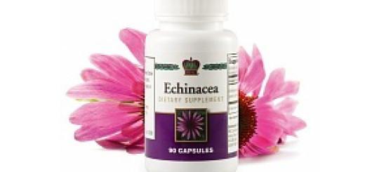 Echinacea1